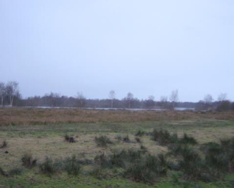 deze boom staat in het begin van het dijkje, als je van haren komt - linksachter kun je het paterswoldsemeer zien