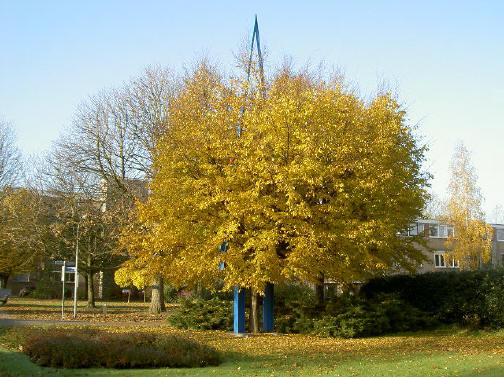de twee bomen zijn al aardig met elkaar vergroeid...