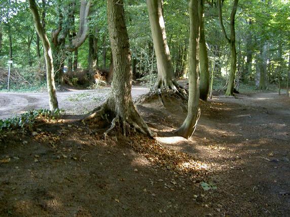 een van de ingangen van het bos