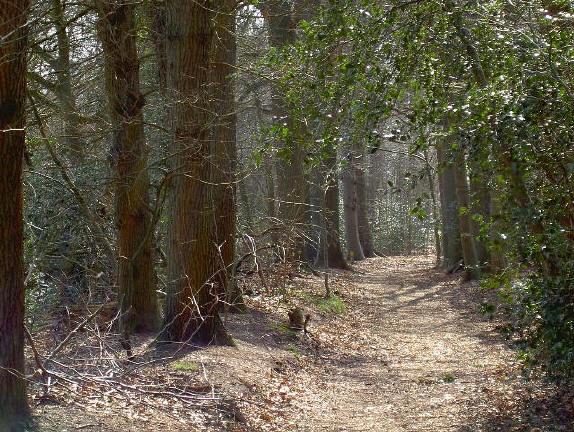 je kunt op verschillende plaatsen zo het bos in wandelen