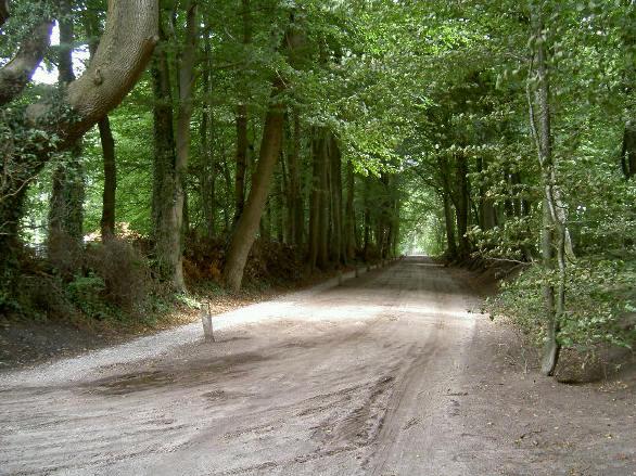soms heb je het gevoel dat je bijna door een bos fietst...