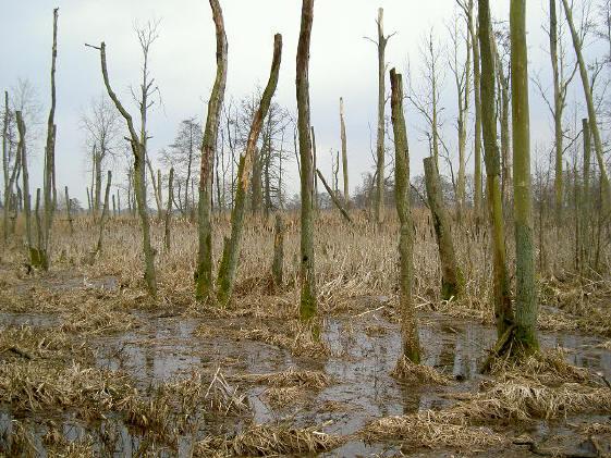 het dooie bosje
