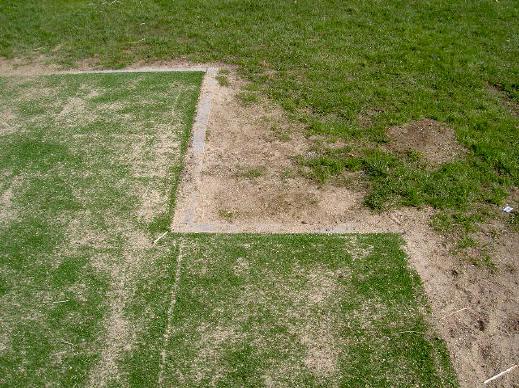 echt gras en kunstgras