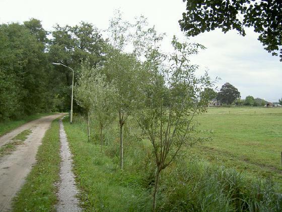 rechts de laatste boerderij van essen