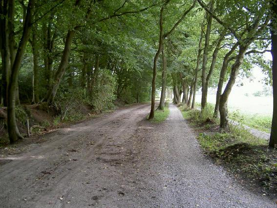 fietsend langs een bos is altijd bijzonder...