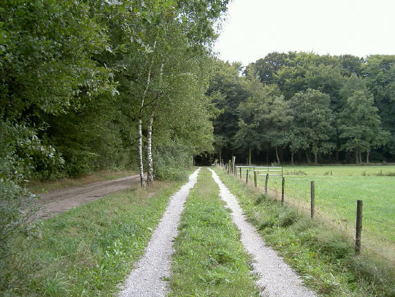 het dubbele fietspad gaat hier naar het bos...