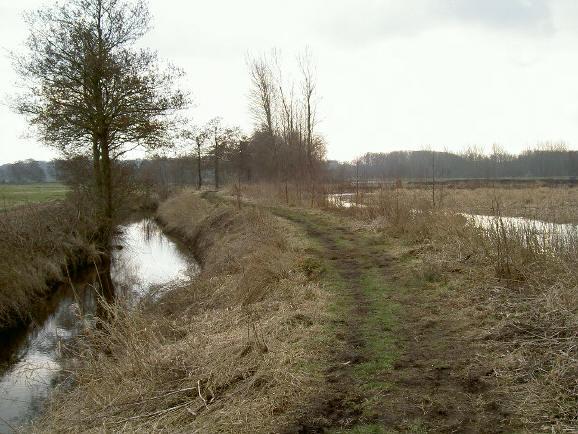 ook hier loop je op een dijkje, met rechts de plassen van het friese veen en links uitgestrekte weilanden