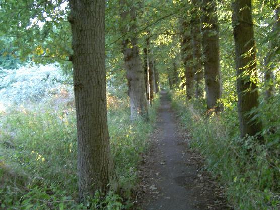 een simpel laantje tussen twee rijen oude bomen...