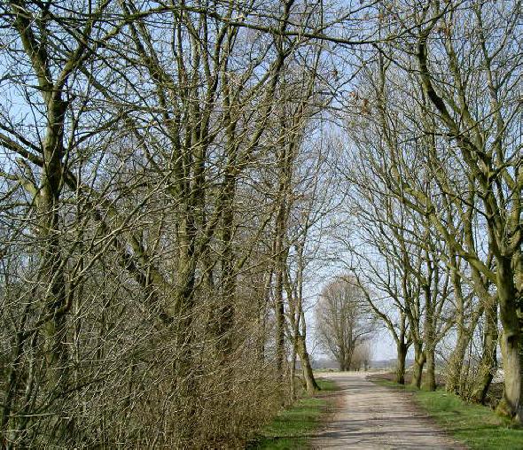 de boom aan het iend staat aan de overkant van het kanaal...