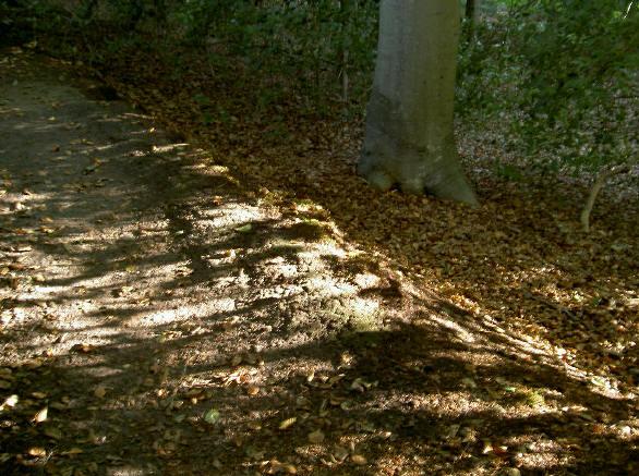 lichtval op bospad