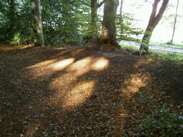 lichtval aan de rand van het bos