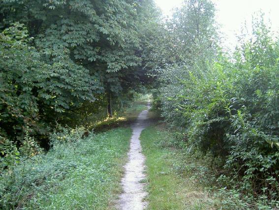 het pad halverwege