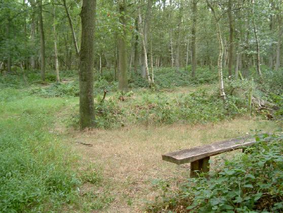 ook middenin dit natuurbos staan bankjes...