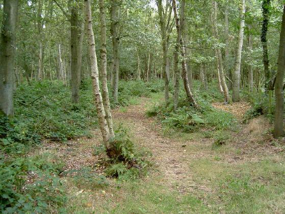 gewoon een erg mooi bos dus...
