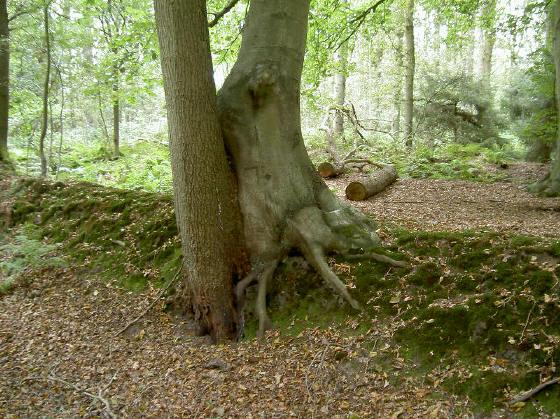 intiem bomenstel...