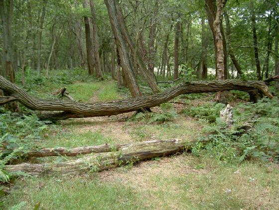 je moet wel af en toe over een boom heenstappen...