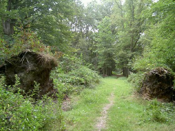 twee omgevallen bomen, naast het pad