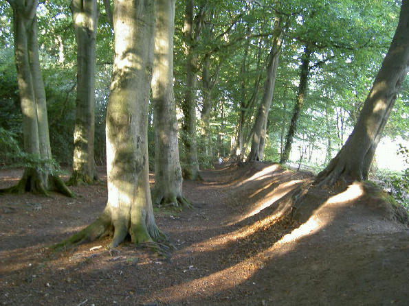 aarden wal aan de rand van het bos