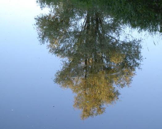 er staan wat mooie hoge bomen rond de sloot