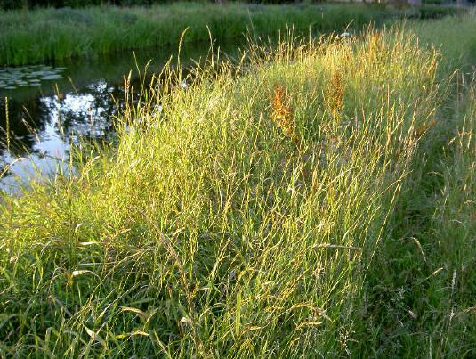 gewoon gras, altijd mooi...