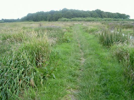 het pad gaat ruim om het bos heen...