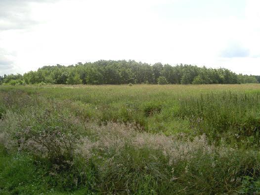 een polder lijkt op het eerste oog saai...