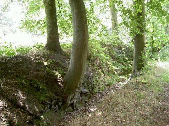 een mooi licht bos ook...