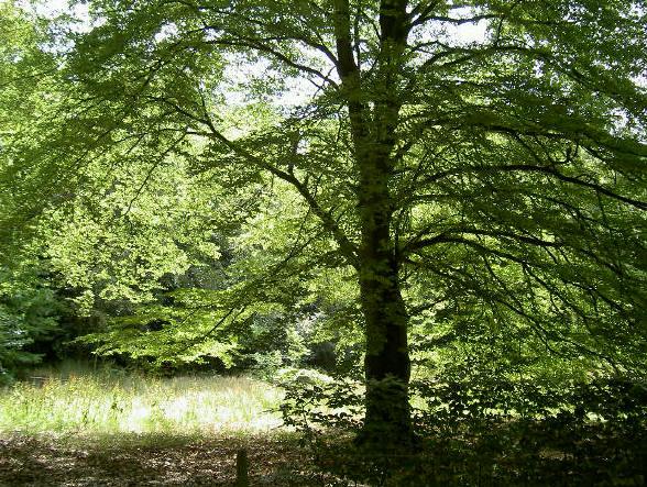 gewoon een mooie boom...