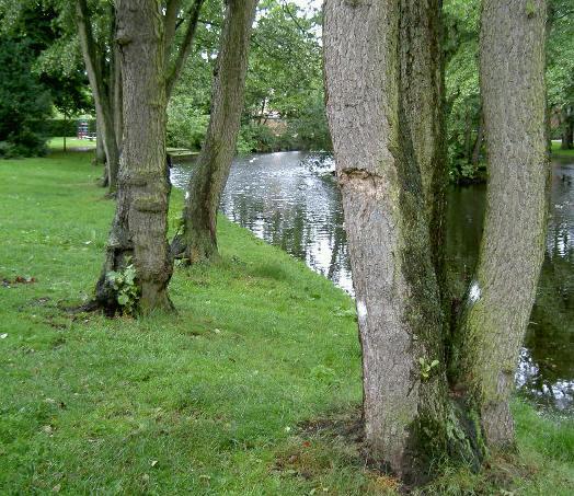 33 bomen weg op één plek, dat is erg veel....