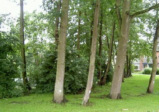 de bomen met stip moeten weg
