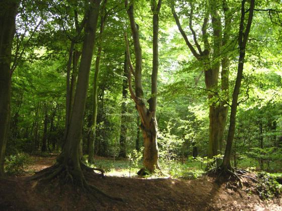 een bos met een echte bossfeer...