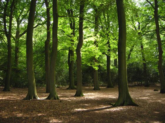 een echte bomenkathedraal...