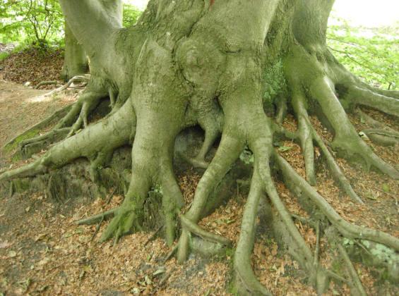 de kwetsbare onderkant van een enorme boom...
