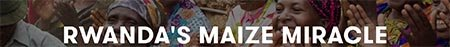 rwanda maize miracle