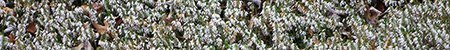 botanische tuin wuppertal